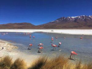 Bolivia - Uyuni - Flamingos